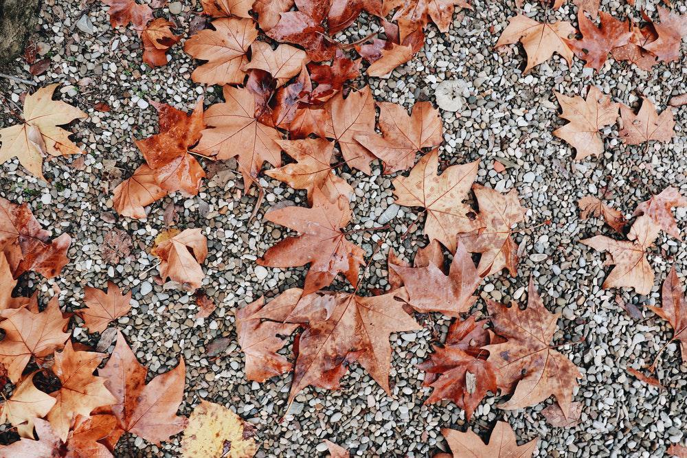 Colecionar, organizar e aprender sobre folhas e plantas