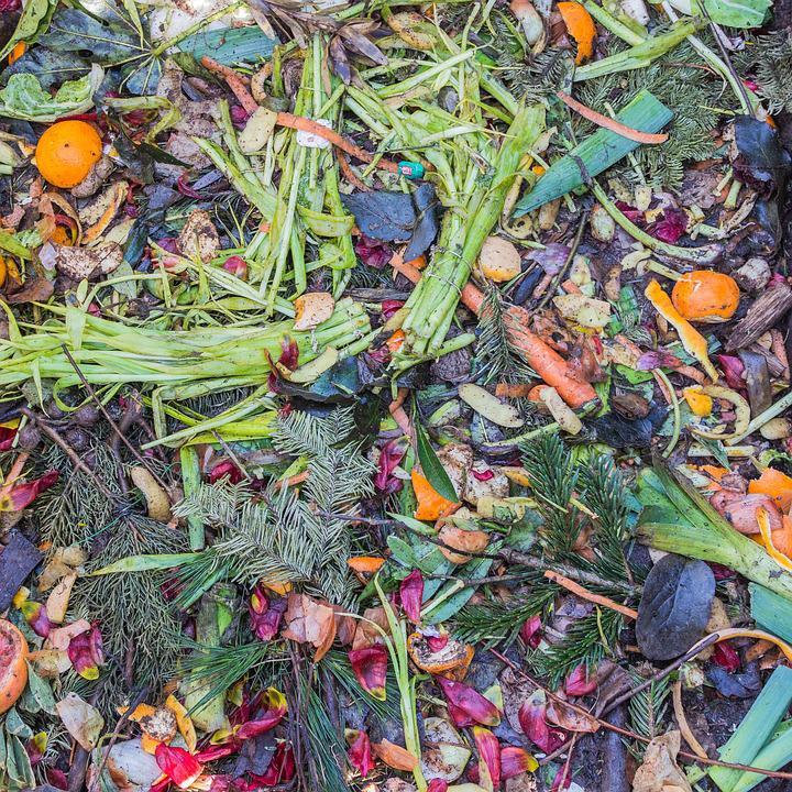 Retratos sobre o desperdício: exposição organizada por jovens de uma comunidade paulistana nos leva a refletir sobre o consumo e descarte de alimentos