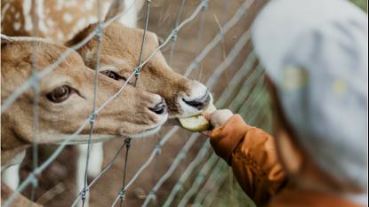 O olhar de um menino de 3 anos sobre os animais em zoológicos