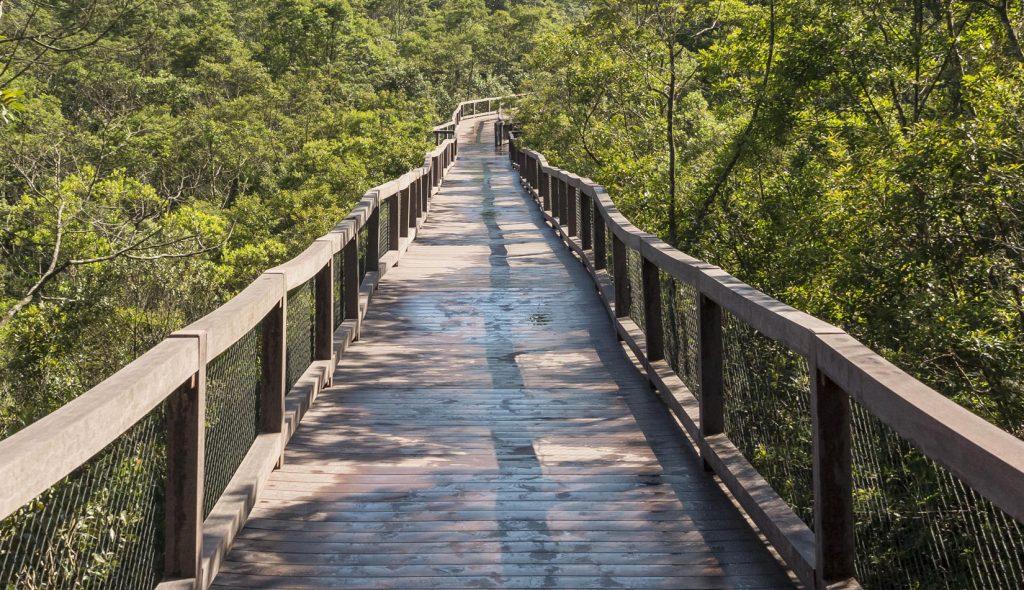 Imagem de trilha suspensa entre árvores no Parque Ecológico Imigrantes.